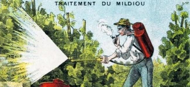 personne traitant du mildiou avec de la bouillie bordelaise avec un pulvérisateur
