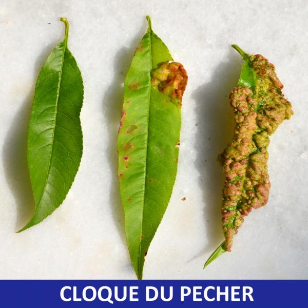 bouillie-bordelaise-pour-verger-et-potager